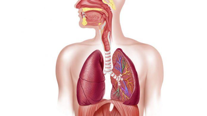 Ανθρώπινο αναπνευστικό σύστημα