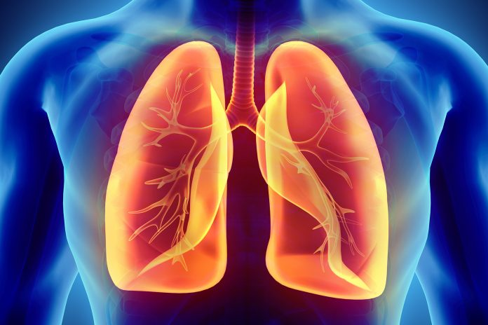 Ανατομία αναπνευστικού συστήματος
