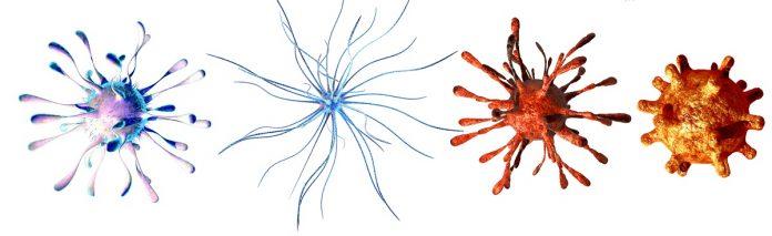 Κυτταρικές αναπτύξεις στο μικροσκόπιο