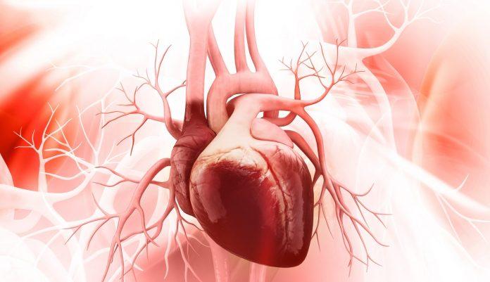 Ανατομία γυναικείας καρδιάς