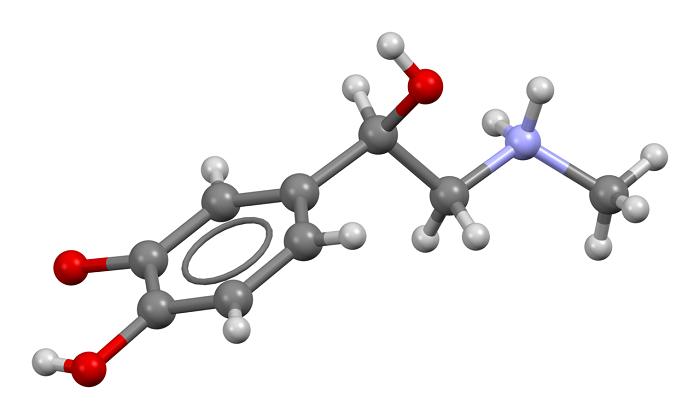Τρισδιάστατο μοντέλο της αδρεναλίνης