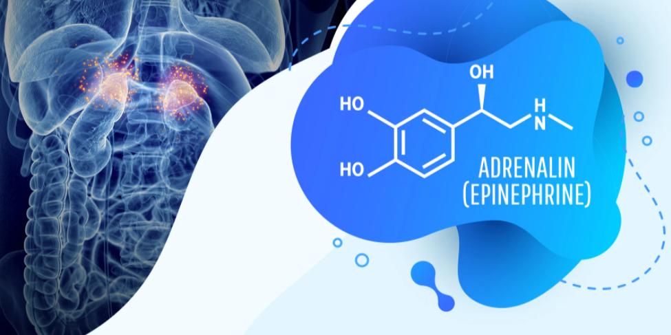 Η χημική σύσταση της αδρεναλίνης