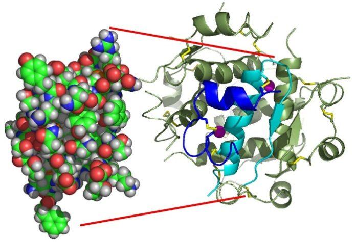 Τρισδιάστατο μοντέλο της ινσουλίνης