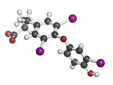 Τρισδιάστατο μοντέλο θυροξίνης