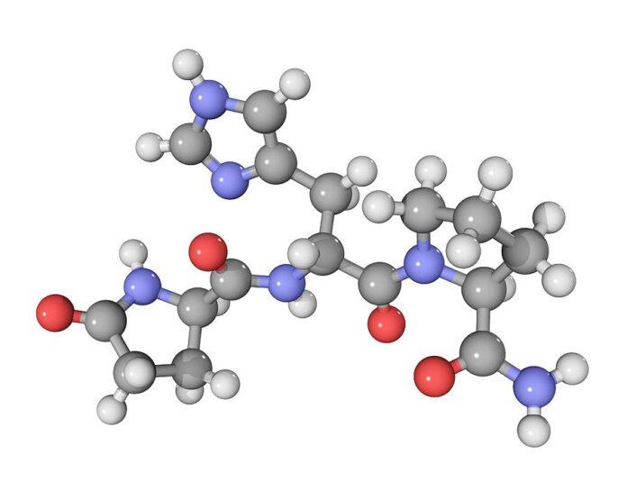 Μικροσκοπική εικόνα της θυρεοειδοτρόποςυ ορμόνης