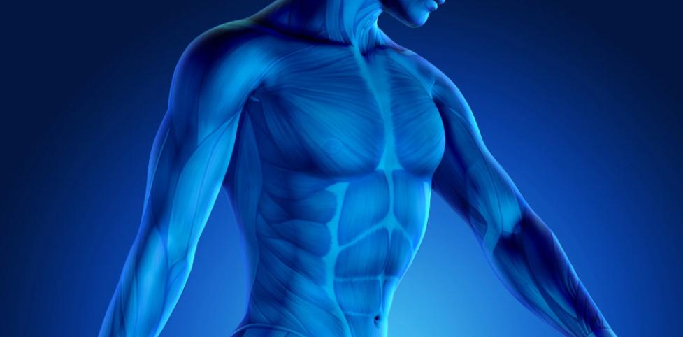 Ανδρικό σώμα και τεστοστερόνη