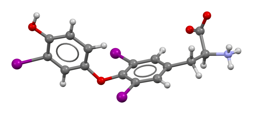 Τρισδιάστατο μοντέλο της Τριιωδοθυρονίνης