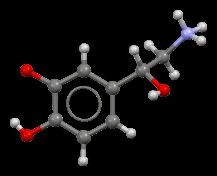 Ιατρικό μοντέλο της νορεπινεφρίνης
