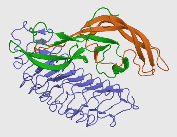 Ιατρικό μοντέλο της θυλακιοτρόπου ορμόνη