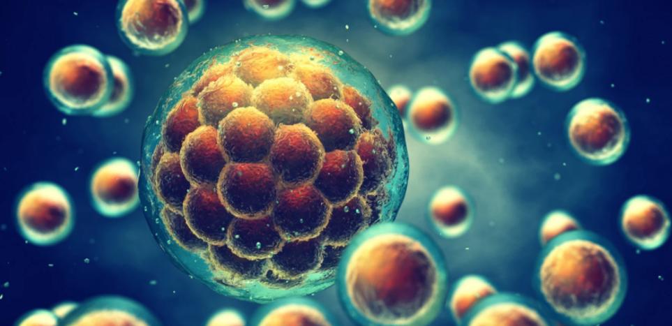 Αντιμυλλέριος ορμόνη στο μικροσκόπιο