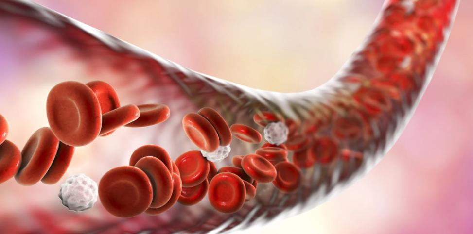 Τρισδιάστατο μοντέλο αγγειοτενσίνης