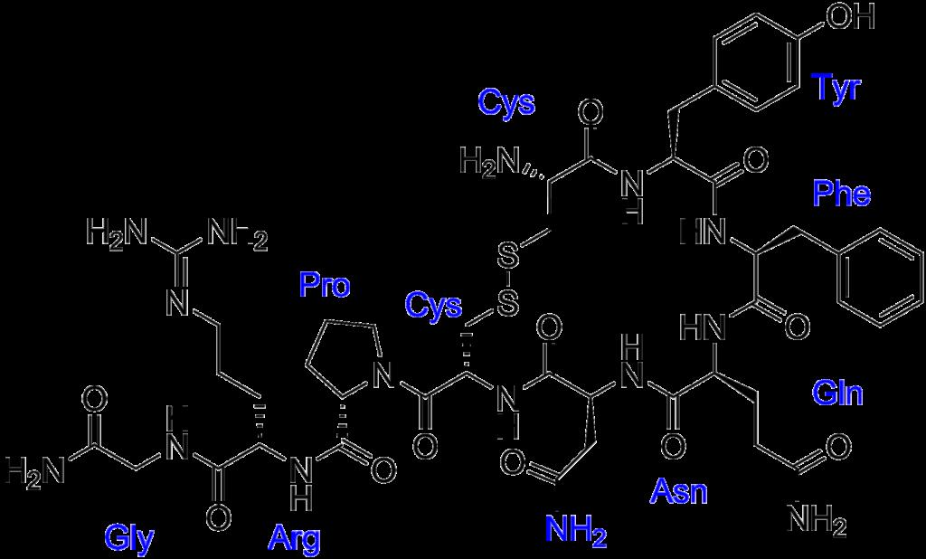Αντι-διουριτική ορμόνη, μοντέλο δισδιάστατο