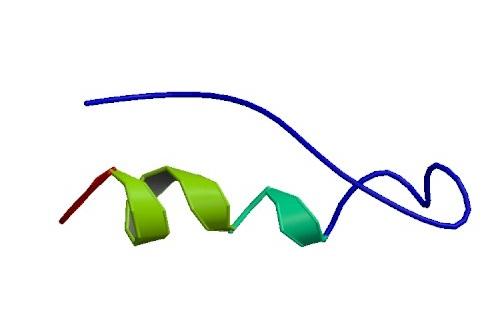 Τρισδιάστατη δομή του πεπτιδίου ΥΥ