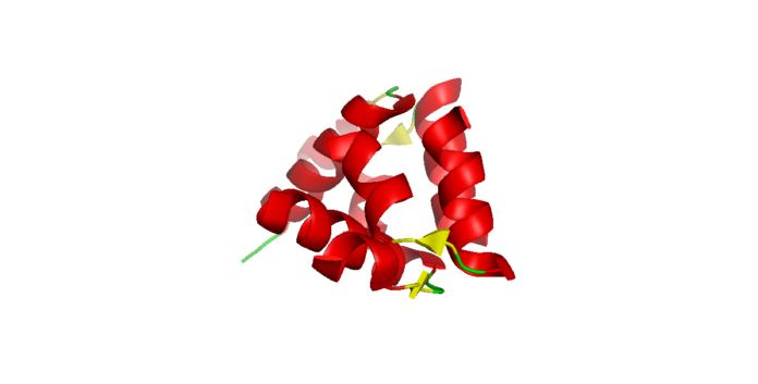 Τρισδιάστατη δομή της ρελαξίνης