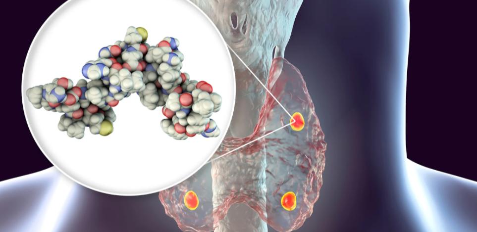 Οι παραθυρεοειδείς αδένες και η παραθυρεοειδική ορμόνη