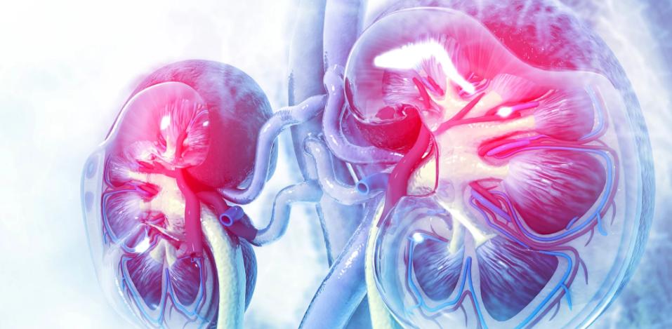 Τα νεφρά και η Βιταμίνη D