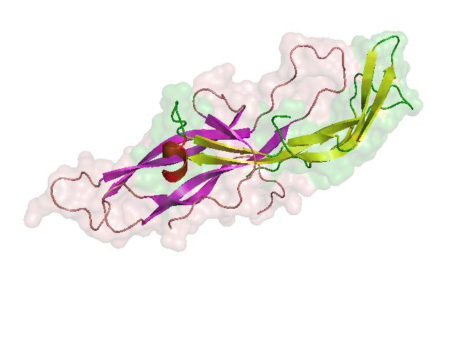 Τρισδιάστατο μοντέλο χοριακής γοναδοτροπίνης